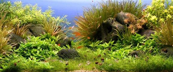 Aquarienlandschaft